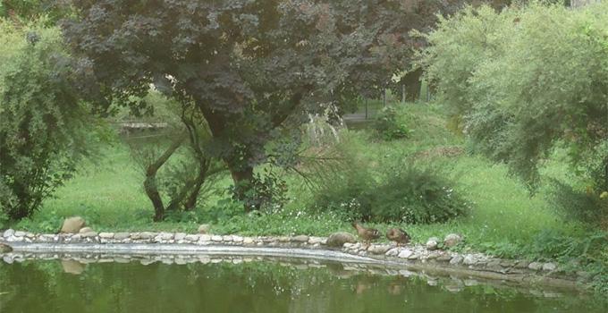 Le parc 5